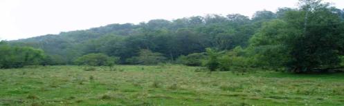 Liberation Park Grass